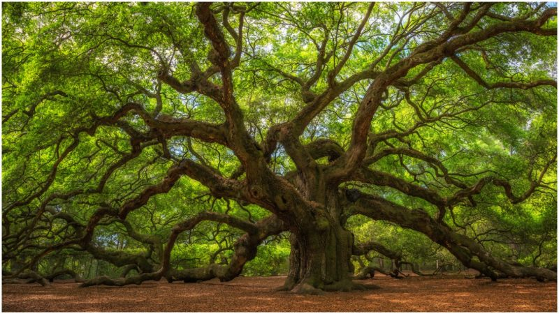 Concept 1- The Tree Trunk with Branches – ONE GOD  – many Faiths/Approaches with the same message so we can understand our role on Earth